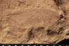 http://mczbase.mcz.harvard.edu/specimen_images/entomology/paleo/large/PALE-13050_Artinska_clara_etho.jpg
