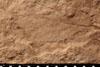 http://mczbase.mcz.harvard.edu/specimen_images/entomology/paleo/large/PALE-13051_Artinska_clara_etho.jpg