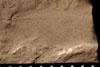 http://mczbase.mcz.harvard.edu/specimen_images/entomology/paleo/large/PALE-13054_Artinska_clara_etho-PartB.jpg