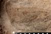 http://mczbase.mcz.harvard.edu/specimen_images/entomology/paleo/large/PALE-13059_Artinska_clara_etho.jpg