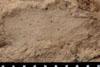 http://mczbase.mcz.harvard.edu/specimen_images/entomology/paleo/large/PALE-13067_Artinska_clara_etho.jpg