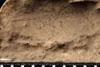 http://mczbase.mcz.harvard.edu/specimen_images/entomology/paleo/large/PALE-13075_Artinska_clara_etho.jpg