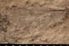 http://mczbase.mcz.harvard.edu/specimen_images/entomology/paleo/large/PALE-13088_Artinska_clara_etho.jpg