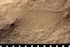 http://mczbase.mcz.harvard.edu/specimen_images/entomology/paleo/large/PALE-13143_Artinska_clara_etho.jpg