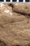 http://mczbase.mcz.harvard.edu/specimen_images/entomology/paleo/large/PALE-13177_Liomopterum_ornatum_detail-etho.jpg