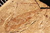 http://mczbase.mcz.harvard.edu/specimen_images/entomology/paleo/large/PALE-1319_Tipula_subterjacens_type.jpg