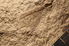 http://mczbase.mcz.harvard.edu/specimen_images/entomology/paleo/large/PALE-13214_Protembia_permiana_(cp_13212).jpg