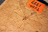 http://mczbase.mcz.harvard.edu/specimen_images/entomology/paleo/large/PALE-1337_Tipula_clauda_type.jpg