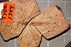 http://mczbase.mcz.harvard.edu/specimen_images/entomology/paleo/large/PALE-1349_Tipula_clauda_type.jpg