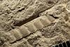 http://mczbase.mcz.harvard.edu/specimen_images/entomology/paleo/large/PALE-13550_Meganisoptera.jpg