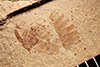 http://mczbase.mcz.harvard.edu/specimen_images/entomology/paleo/large/PALE-13876_Pterygota.jpg