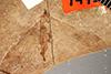 http://mczbase.mcz.harvard.edu/specimen_images/entomology/paleo/large/PALE-1445_Tipula_florissanta_type.jpg