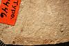 http://mczbase.mcz.harvard.edu/specimen_images/entomology/paleo/large/PALE-1446_Tipula_florissanta_type.jpg