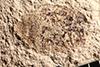 http://mczbase.mcz.harvard.edu/specimen_images/entomology/paleo/large/PALE-14503_Hister_coprolithorum.jpg