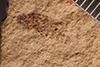 http://mczbase.mcz.harvard.edu/specimen_images/entomology/paleo/large/PALE-1522_Laasbium_sectile_holotype_1.jpg