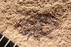 http://mczbase.mcz.harvard.edu/specimen_images/entomology/paleo/large/PALE-161_Geralophus_occultus.jpg