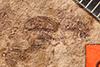 http://mczbase.mcz.harvard.edu/specimen_images/entomology/paleo/large/PALE-1633_Geralophus_lassatus_type.jpg