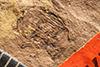 http://mczbase.mcz.harvard.edu/specimen_images/entomology/paleo/large/PALE-1644_Geralophus_lassatus_type.jpg