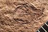 http://mczbase.mcz.harvard.edu/specimen_images/entomology/paleo/large/PALE-1648_Geralophus_lassatus_type.jpg