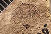 http://mczbase.mcz.harvard.edu/specimen_images/entomology/paleo/large/PALE-1666_Geralophus_sp.jpg