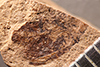 http://mczbase.mcz.harvard.edu/specimen_images/entomology/paleo/large/PALE-1670_Geralophus_sp.jpg