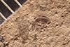 http://mczbase.mcz.harvard.edu/specimen_images/entomology/paleo/large/PALE-1700_Apion_pumilum_type.jpg