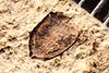 http://mczbase.mcz.harvard.edu/specimen_images/entomology/paleo/large/PALE-17729_Plantae.jpg