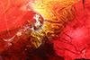 http://mczbase.mcz.harvard.edu/specimen_images/entomology/paleo/large/PALE-17840_syn10_Sciaridae.jpg