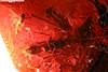 http://mczbase.mcz.harvard.edu/specimen_images/entomology/paleo/large/PALE-17840_syn1_Hymenoptera.jpg