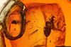 http://mczbase.mcz.harvard.edu/specimen_images/entomology/paleo/large/PALE-17913_Chironomidae.jpg