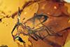 http://mczbase.mcz.harvard.edu/specimen_images/entomology/paleo/large/PALE-18039_Palaeobrachypogon_remmi_allotype.jpg