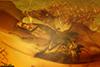 http://mczbase.mcz.harvard.edu/specimen_images/entomology/paleo/large/PALE-18042_Heleageron_arenatus_paratype.jpg