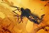 http://mczbase.mcz.harvard.edu/specimen_images/entomology/paleo/large/PALE-18059_Ceratopogonidae.jpg