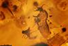 http://mczbase.mcz.harvard.edu/specimen_images/entomology/paleo/large/PALE-18068_Ceratopogonidae.jpg