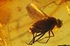http://mczbase.mcz.harvard.edu/specimen_images/entomology/paleo/large/PALE-18132_Palaeomedeterus_sp.jpg