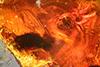 http://mczbase.mcz.harvard.edu/specimen_images/entomology/paleo/large/PALE-18136_Dolichopodidae.jpg