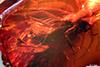 http://mczbase.mcz.harvard.edu/specimen_images/entomology/paleo/large/PALE-18136_syn2_Dolichopodidae.jpg