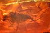 http://mczbase.mcz.harvard.edu/specimen_images/entomology/paleo/large/PALE-18139_Dolichopodidae.jpg
