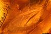 http://mczbase.mcz.harvard.edu/specimen_images/entomology/paleo/large/PALE-18159_Dolichopodidae_2.jpg