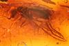 http://mczbase.mcz.harvard.edu/specimen_images/entomology/paleo/large/PALE-18164_Dolichopodidae.jpg