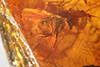 http://mczbase.mcz.harvard.edu/specimen_images/entomology/paleo/large/PALE-18168_Dolichopodidae.jpg