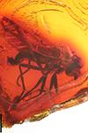 http://mczbase.mcz.harvard.edu/specimen_images/entomology/paleo/large/PALE-18172_Rhagionidae_1.jpg
