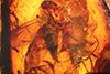 http://mczbase.mcz.harvard.edu/specimen_images/entomology/paleo/large/PALE-18175_Rhagionidae.jpg