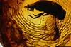 http://mczbase.mcz.harvard.edu/specimen_images/entomology/paleo/large/PALE-18179_Rhagionidae.jpg