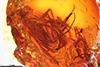 http://mczbase.mcz.harvard.edu/specimen_images/entomology/paleo/large/PALE-18181_Rhagionidae_1.jpg