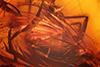 http://mczbase.mcz.harvard.edu/specimen_images/entomology/paleo/large/PALE-18181_Rhagionidae_2.jpg
