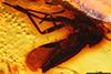 http://mczbase.mcz.harvard.edu/specimen_images/entomology/paleo/large/PALE-18198_Rhagionidae_qm_1.jpg