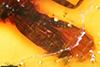 http://mczbase.mcz.harvard.edu/specimen_images/entomology/paleo/large/PALE-18198_Rhagionidae_qm_2.jpg