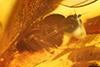 http://mczbase.mcz.harvard.edu/specimen_images/entomology/paleo/large/PALE-18226_syn2_Brachycera.jpg