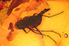http://mczbase.mcz.harvard.edu/specimen_images/entomology/paleo/large/PALE-18227_Brachycera.jpg